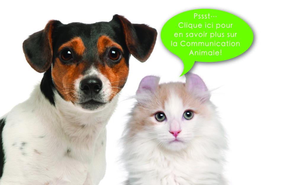 Atelier, Cours et Consultation animale