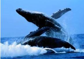 message baleine